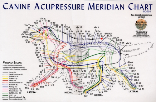Acupressure Meridian Charts ~ Canine, Equine, and Feline